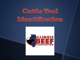 Cattle Tools - Illinois Beef Association