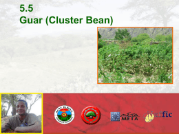 5.5 Guar (Cluster Bean) - Spate Irrigation Network