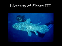 Diversity of Fishes III