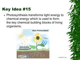 Key Idea 15 Photosynthesis