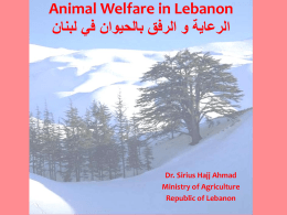 Animal Welfare Situation in Lebanon - Middle East