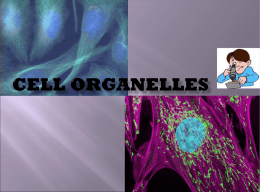 Cell Organelles powerpoint
