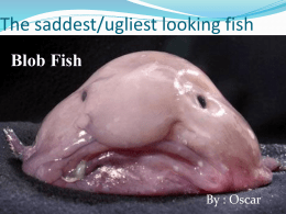 What eats blob fish?