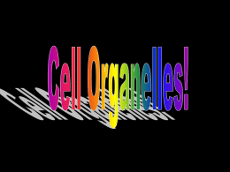 Cell Organelles PPT - fcbrowser . aisd .net
