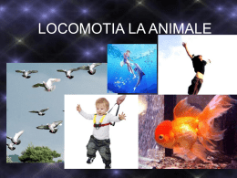 LOCOMOTIA LA ANIMALE (final) - CNILC