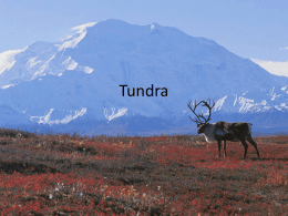 Case Study: Tundra (By Suzanne) - geo