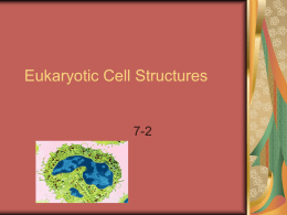 7-2 Eukaryotic Cell Parts Powerpoint