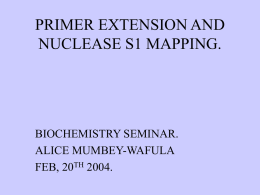 PRIMER EXTENSION, AND NUCLEASE SI MAPPING.