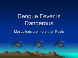 Dengue Fever is Dangerous - Woodshed Environment Coalition