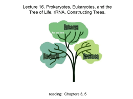 Lecture 16. Prokaryotes, Eukaryotes, and the Tree of Life