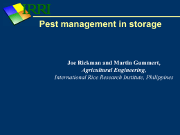Pest management - IRRI Rice Knowledge Bank