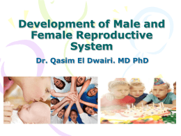 Development of Male and Female Reproductive System