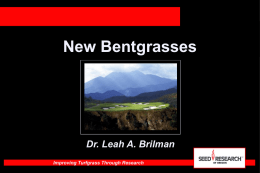 New Bentgrasses - Seed Research of Oregon