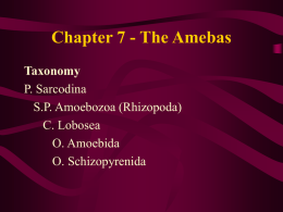 Ch. 7, The Amebas - University of Evansville Faculty Web sites