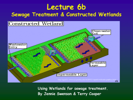Pathogen Removal in Constructed Wetlands