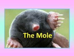The Mole - Polson 7-8