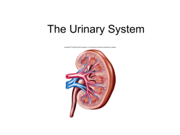 The Urinary System - Imperial Valley College