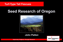 Turf-Type Tall Fescues - Seed Research of Oregon