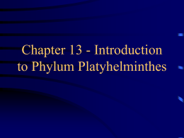 Chapter 13 - Introduction to Phylum Platyhelminthes