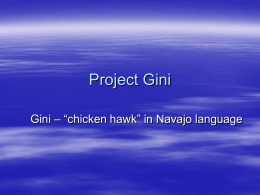 Project Gini - General Numerics LLC