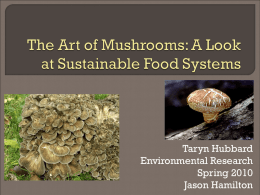 The Art of Mushrooms: A Look at Sustainable Food Systems