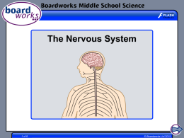 The Nervous System - Boardworks Education