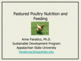 Poultry Feeds - Sustainable Development