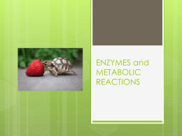 ENZYMES and METABOLIC REACTIONS