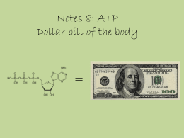 Notes 8: ATP Dollar bill of the body