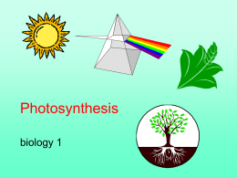 Photosynthesis - College of the Atlantic