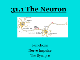 31.1 The Neuron