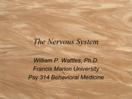 The Nervous System - Francis Marion University
