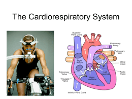 Cardiovascular and Respiratory Anatomy