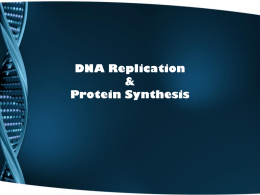 DNA Replication & Protein Synthesis