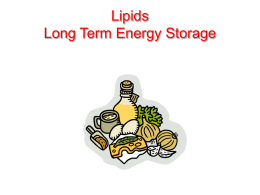 Lipids Long Term Energy Storage