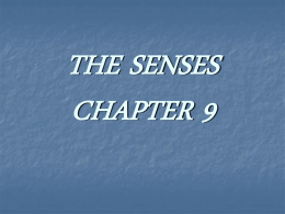CHAPTER 11: SPECIAL SENSES: The Eyes and Ears