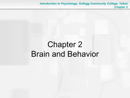 Chapter 2: The Brain and Behavior