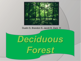 Deciduous Forests - Byron High School