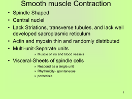 Smooth muscle Contraction - Current University of Rio