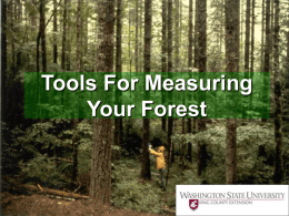 Tools For Measuring Your Forest