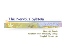 The Nervous System - Volunteer State Community College