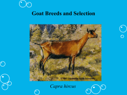 Beef Breeds and Selection Agriscience I