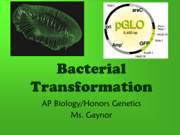 Bacterial Transformation - Baldwinsville Central School