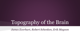 Topography of the Brain
