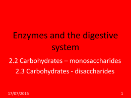 Enzymes and the digestive system - VBIOLOGY