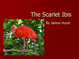 The Scarlet Ibis - Johnston County Schools