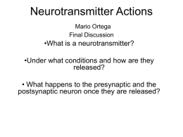 Neurotransmitter Actions