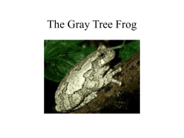 The Gray Tree Frog - Shaw Communications