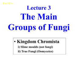 Lecture 3 The Main Groups of Fungi