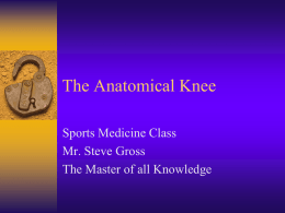 The Anatomical Knee - Helena Public School District